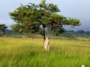 Guten Morgen Afrika!