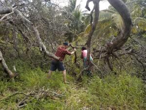 Holzernte in Zavala Quissico