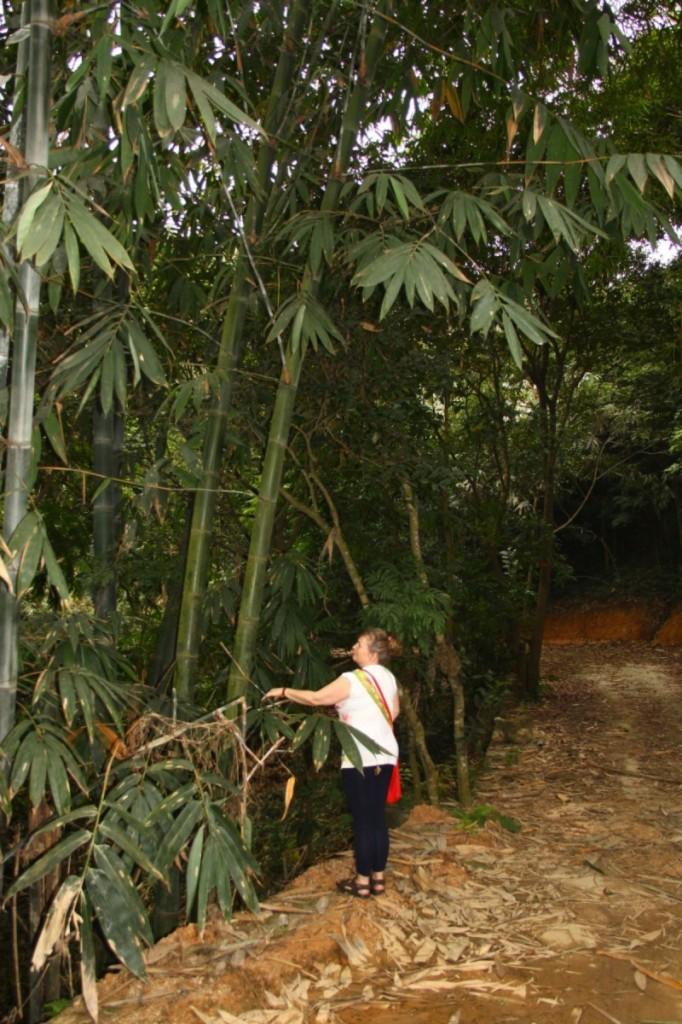 im Bambuswald Halong Vietnam