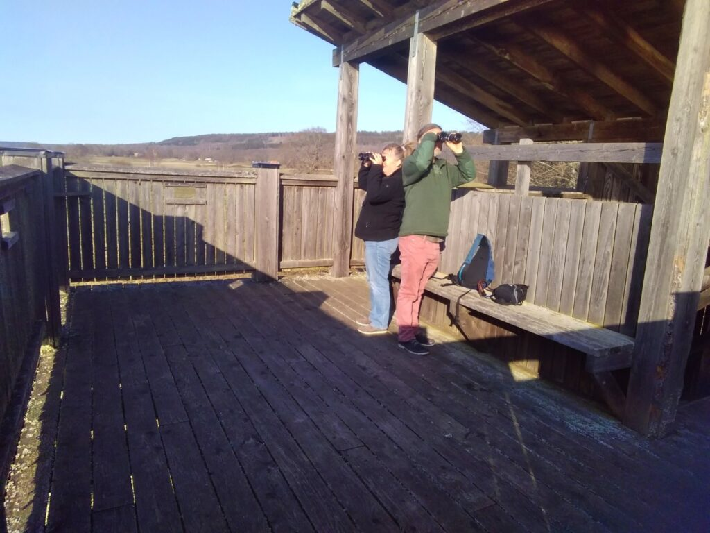 Beobachtungspunkt Fäholmen am Hornborgasjön